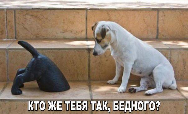 5462122_sobaki17 (604x366, 76Kb)