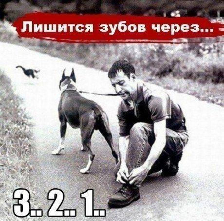 5462122_sobaki31 (460x453, 63Kb)