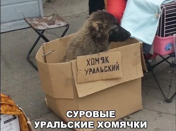 5462122_sobaki56 (600x449, 65Kb)