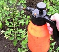 chem-obrabatyvat-pomidory-i-ogurcy (255x225, 91Kb)