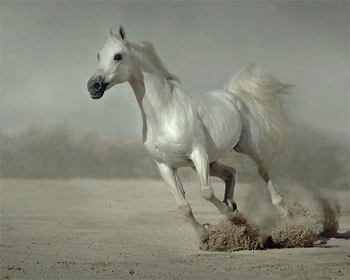 арабская лошадь2 (700x560, 286Kb)
