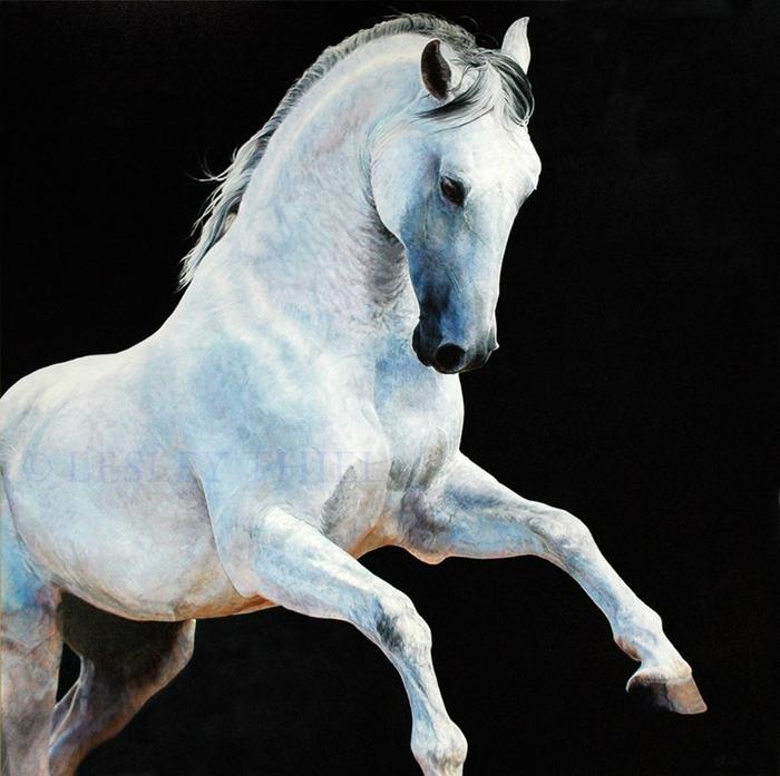 арабская лошадь6 (700x697, 345Kb)