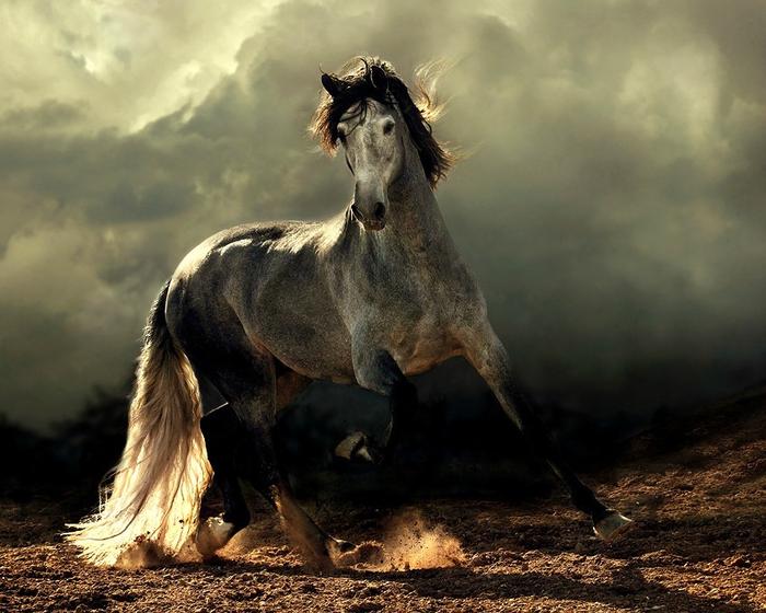 андалузская лошадь2 (700x560, 374Kb)