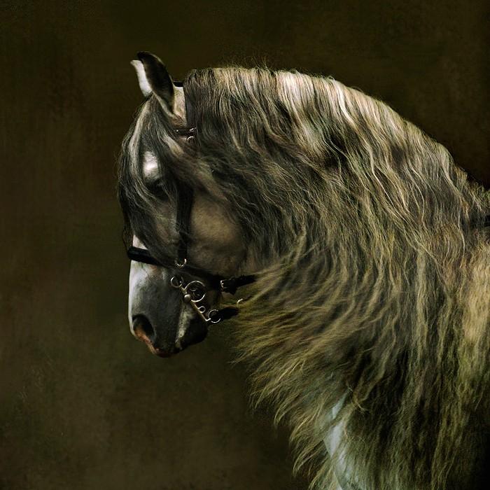 андалузская лошадь4 (700x700, 412Kb)