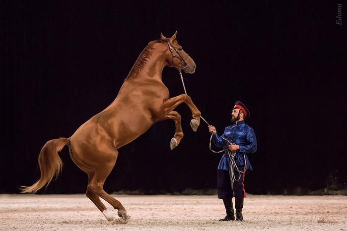 донская порода лошадей (700x466, 239Kb)