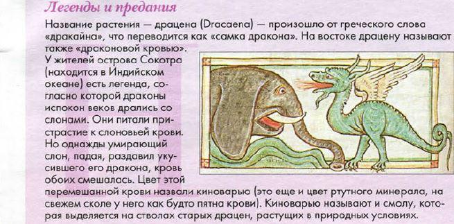 5996702_Dracena_2_Jyrnal_Cvetok_1_2015g (655x323, 72Kb)