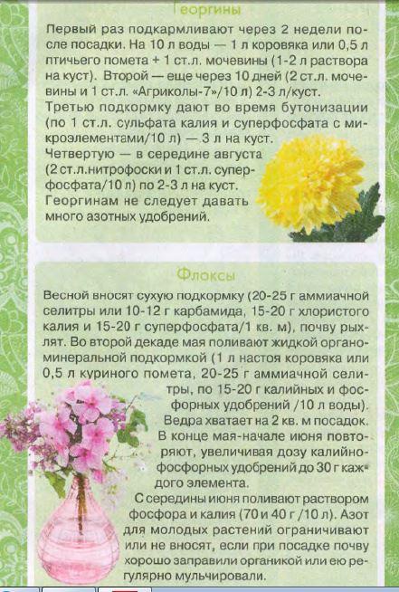 5996702_Podkormka_georgini_floksi_1_ (441x654, 86Kb)
