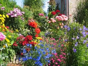 kakie-odnoletnie-cvety-cvetut-vse-leto-300x225 (300x225, 52Kb)