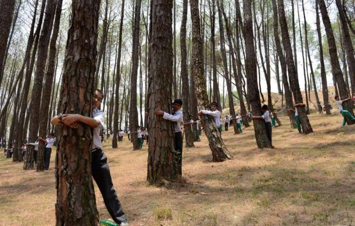 дерев (700x446, 325Kb)