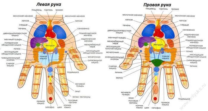 Какой палец на руке связан с органами