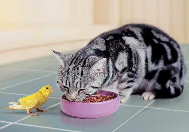 Какими продуктами нельзя кормить домашних животных
