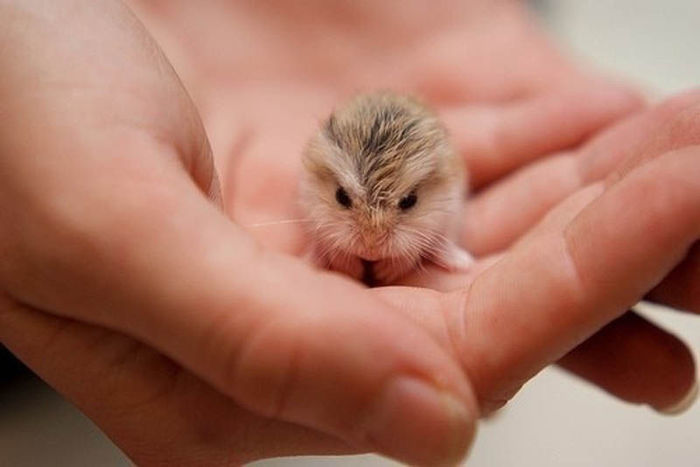adorable_tiny_things_640_56 (700x467, 32Kb)