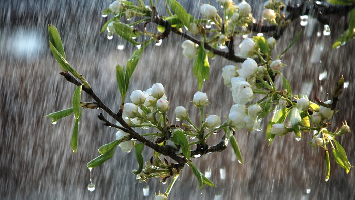 4645749_1460488843_gomeltut_by_beautifulrainyspringdaytreesinbloom_2560x1440 (700x393, 234Kb)