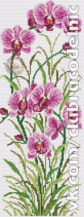 Орхидея (272x700, 334Kb)