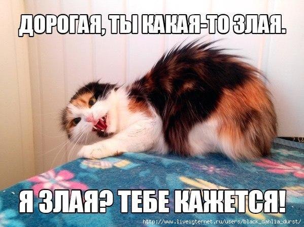 IMG_6551 (599x448, 154Kb)