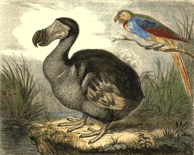 Бедный Додо   вымершая птица