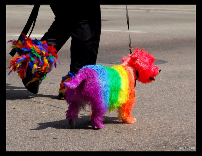 1215218269_rainbow_the_dog_by_bellykelly (700x539, 374Kb)