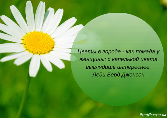 Статус афоризм цветы