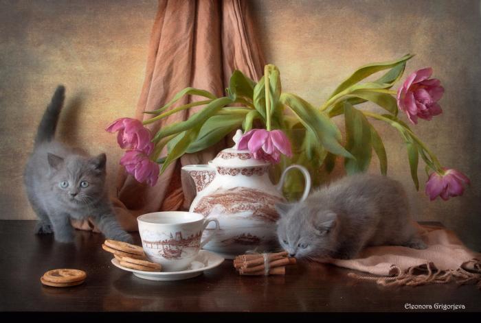 Котики Элеоноры Григорьевой1а (700x471, 440Kb)