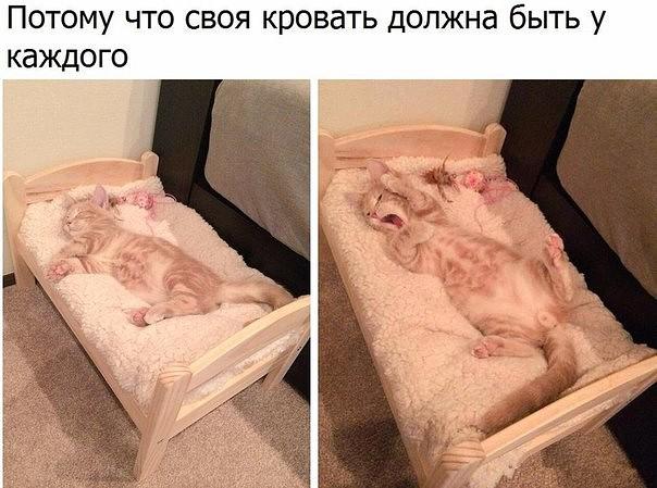 5283370_son_kot_krovat (604x449, 74Kb)