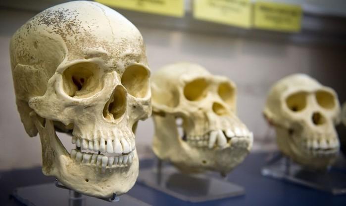 Как появились зубные протезы? Стоматологические изобретения