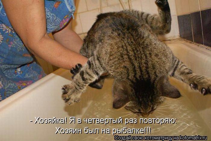 kotomatritsa__a (700x469, 277Kb)