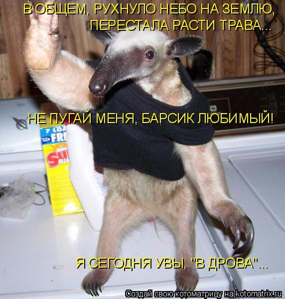 kotomatritsa_8 (572x600, 328Kb)