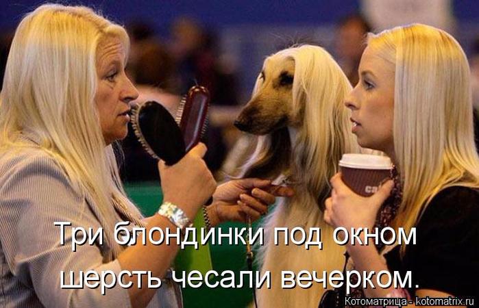 kotomatritsa_66 (700x450, 354Kb)