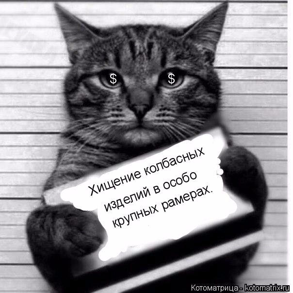 kotomatritsa_c (604x604, 162Kb)