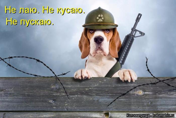 kotomatritsa_e (700x469, 275Kb)