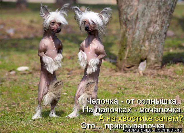 kotomatritsa_F_ (640x462, 315Kb)