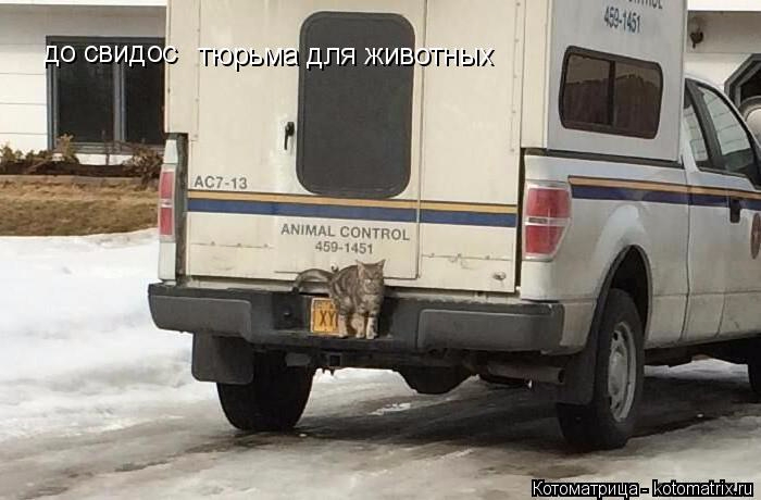 kotomatritsa_H (700x460, 185Kb)