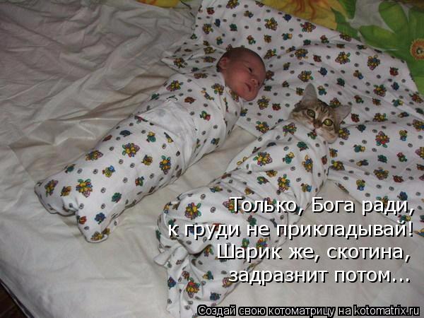 kotomatritsa_r (600x450, 233Kb)