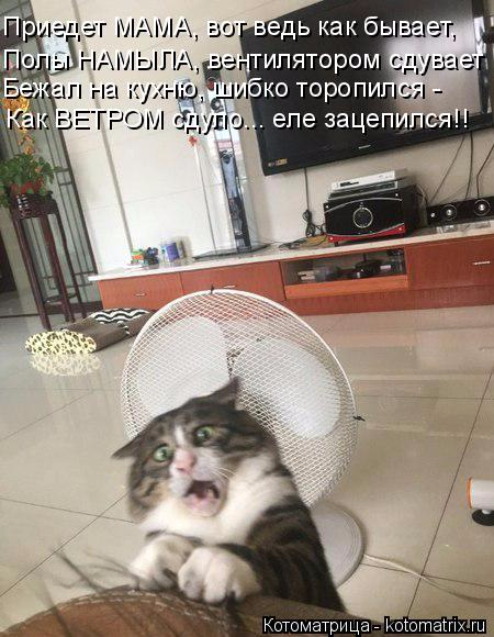 kotomatritsa_t (450x580, 237Kb)