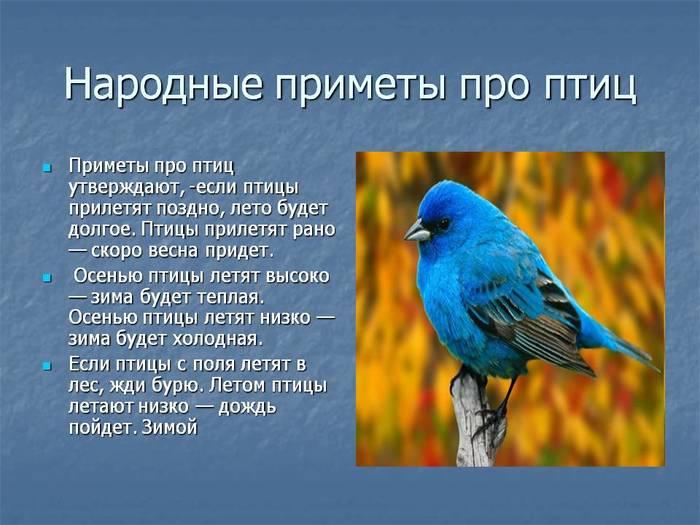 """alt=""""Птичьи приметы""""/2835299_1 (700x525, 54Kb)"""