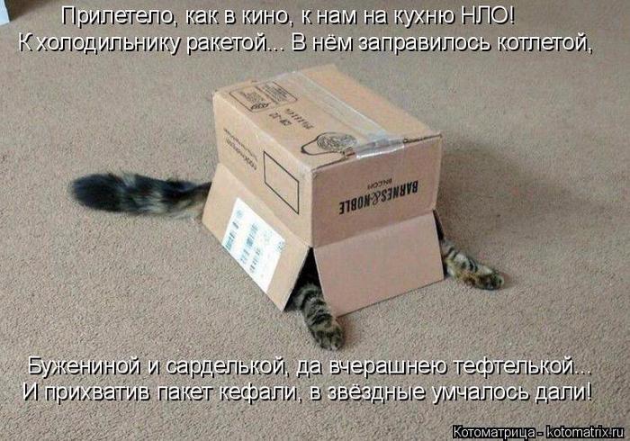 kotomatritsa_q (1) (700x490, 370Kb)