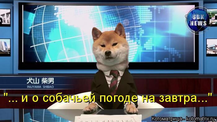 kotomatritsa_S (700x394, 251Kb)