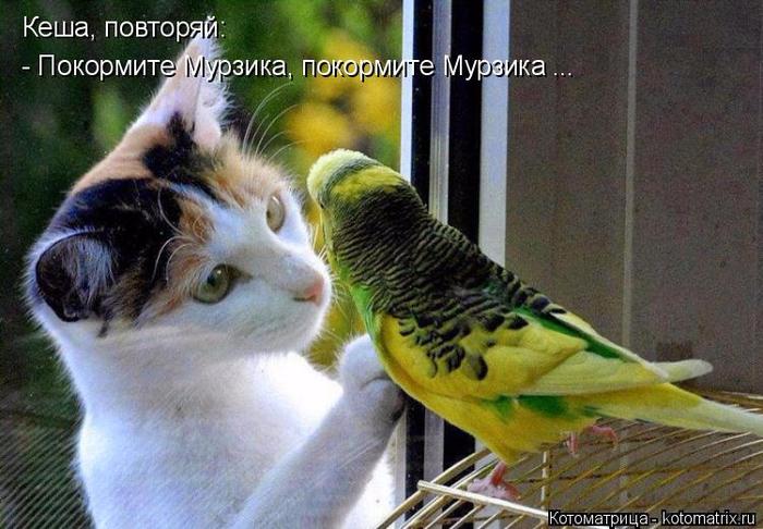 kotomatritsa_T (700x486, 380Kb)