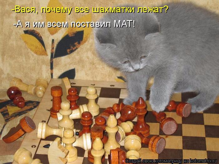 kotomatritsa_tj (700x524, 394Kb)