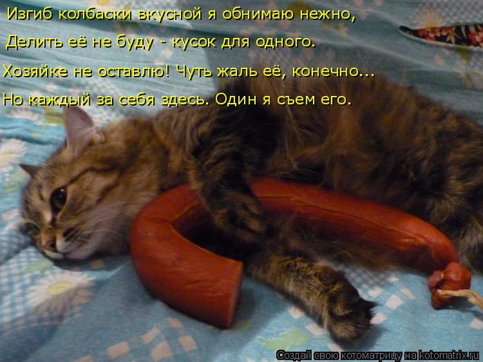 kotomatritsa_Z (700x524, 416Kb)