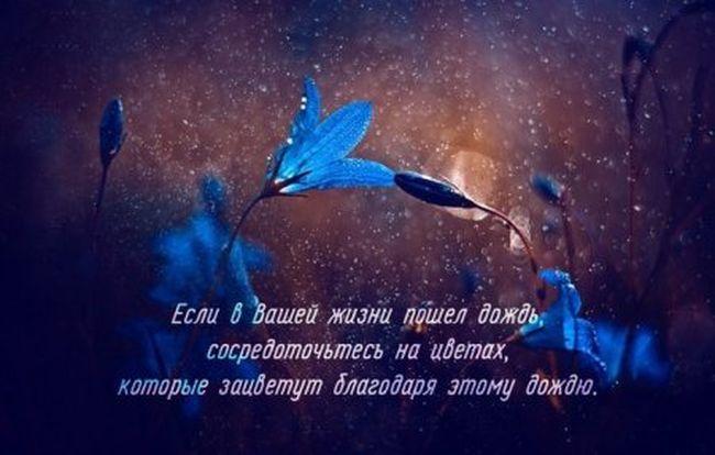 1417066051_011-ellf.ru (650x414, 94Kb)