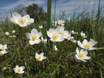 Превью anemone_paradise_by_mossagateturtle-db8u8jc (700x525, 463Kb)