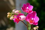 Превью darling_orchid_8870___8872_da_by_wolfartistic-db4gs4n (700x466, 352Kb)
