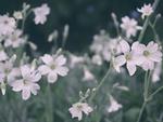 Превью rainy_spring_evening_by_yume_no_yukari_photo-dbak4ig (700x528, 342Kb)