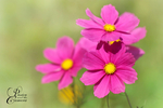 Превью sunny_day_by_passionandthecamera-d8257x7 (700x466, 266Kb)
