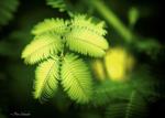 Превью tender_green__by_phototubby-day2yzh (700x500, 289Kb)