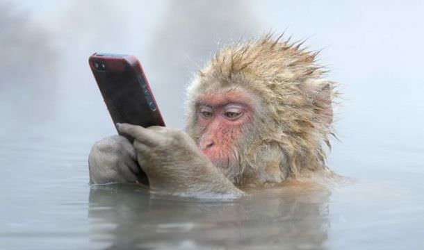 Обезьянка с айфоном