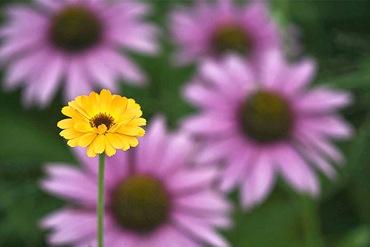 Flowerbedofficinalis01_thumb (370x247, 74Kb)