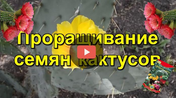 4394744_zastavka_dlya_VK (700x390, 247Kb)
