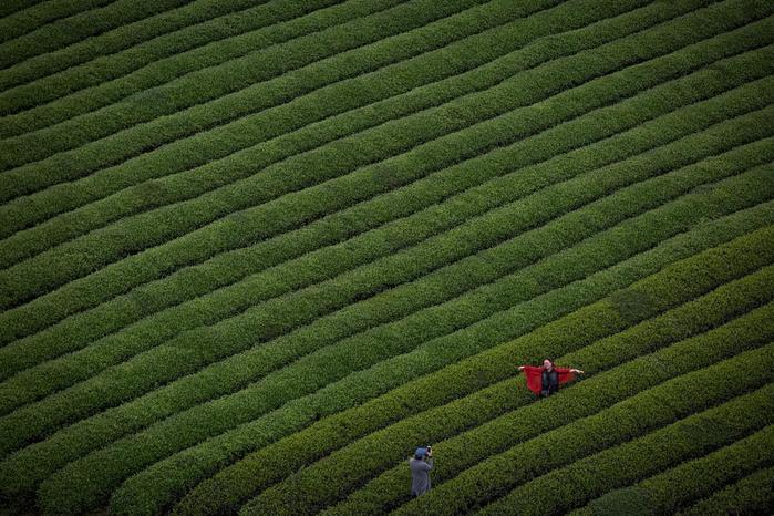 Китай производит каждую четвертую чашку чая в мире /4535473_0 (700x466, 77Kb)